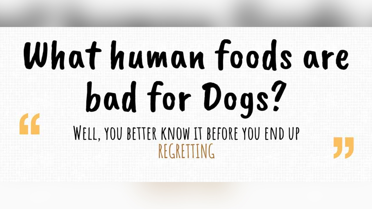 8 Human Foods That Are Pure Toxin for Dogs – Infographic