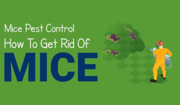 How to Prevent Mice Infestation in Your Home or Business Premises - Infographic