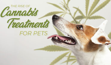 The Case for Natural Pet Remedies: Cannabis Treatment - Infographic