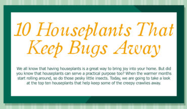 10 Beautiful Houseplants That Protect from Nasty Insects - Infographic
