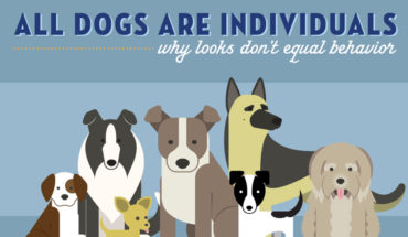 Dog Breed Behavior Patterns: Myths Vs Scientific Truth - Infographic