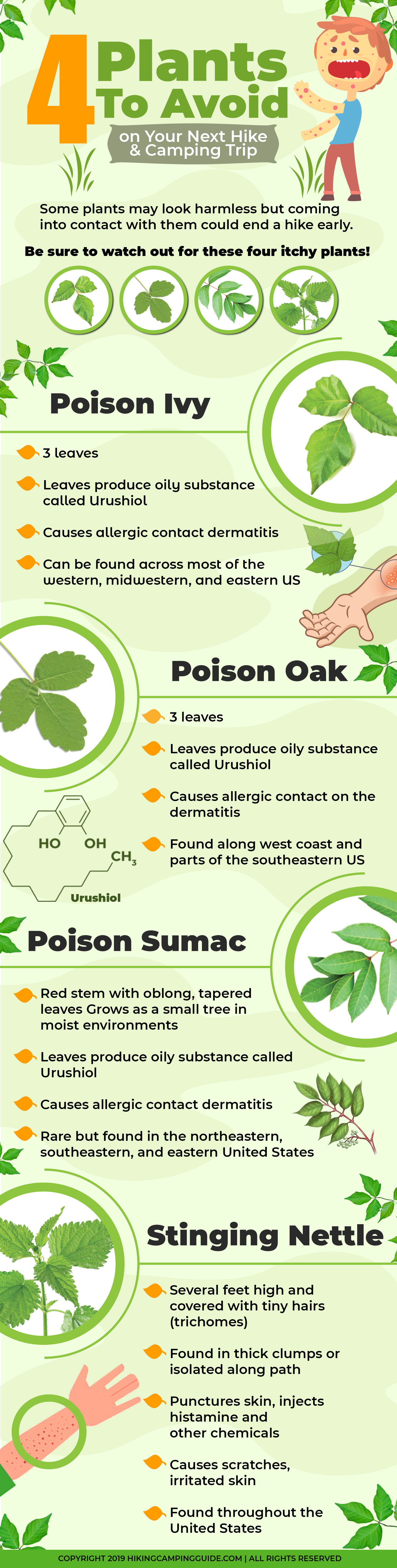 Going Hiking? 4 Green Plants You Must Avoid! - Infographic