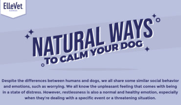 Natural Ways to Calm Your Dog - Infographic