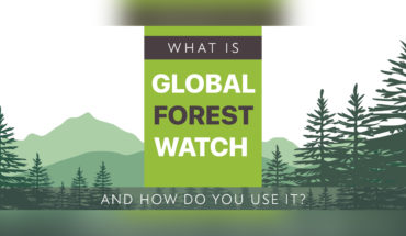 Global Forest Watch: How We Can Use Its Findings - Infographic
