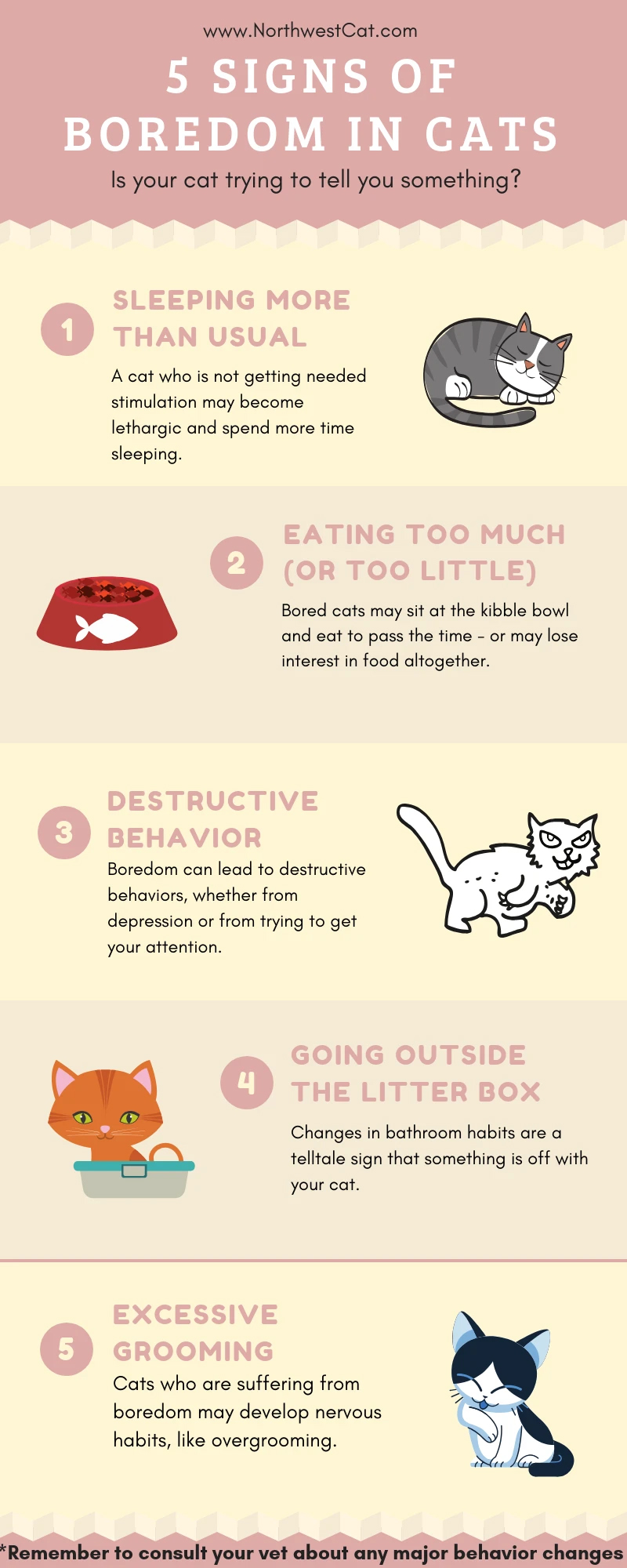 Is Your Cat Asking for Help? 5 Atypical Behavior Patterns - Infographic