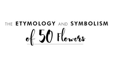 What's in a Name: Etymology of 50 Flowers - Infographic