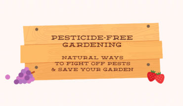 How to Excel at Pesticide-Free Gardening - Infographic