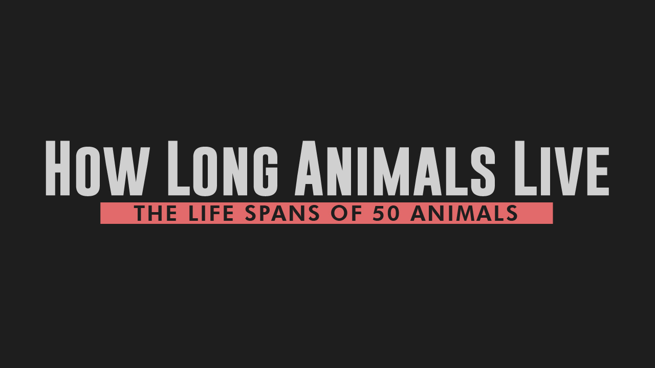 How Long Do Living Beings Live: The Life Span of 50 Species - Infographic