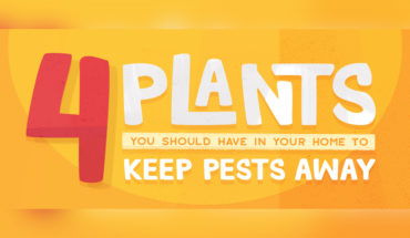 to Keep Pests Away - Infographic