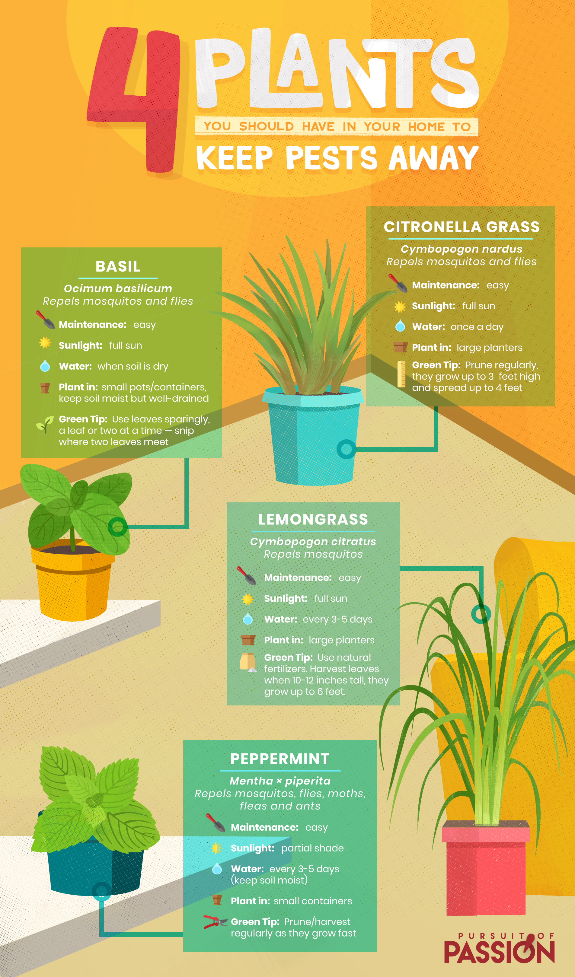 4 Plants You Should Have in Your Home to Keep Pests Away - Infographic