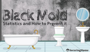 Everything You Need To Know About Black Mold And Eliminating It - Infographic