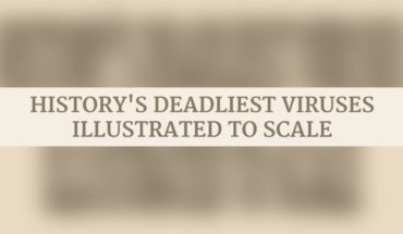 24 Deadliest Viruses Rated In Order Of The Mortality Rate - Infographic