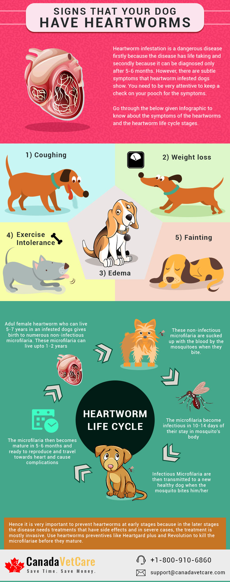 5 Signs That Indicate Your Dog Has Heartworms - Infographic