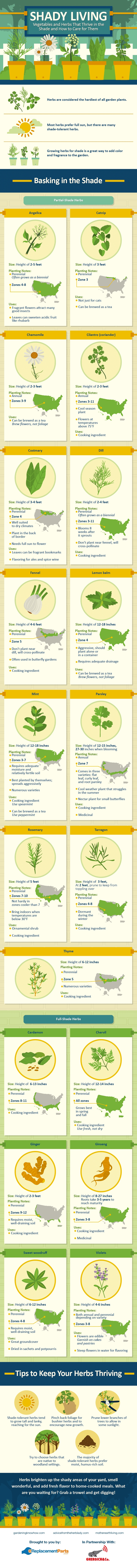 Different Kinds Of Herbs And Vegetables That Grow In The Shade - Infographic