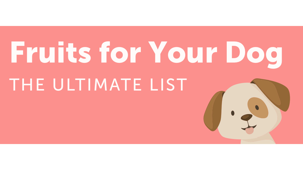 Your Dog Should Be Eating These 10 Fruits - Infographic