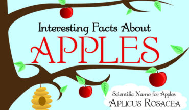 9 Lesser Known Facts About The Amazing Apple - Infographic