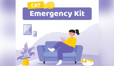 How To Make A Cat Emergency Kit