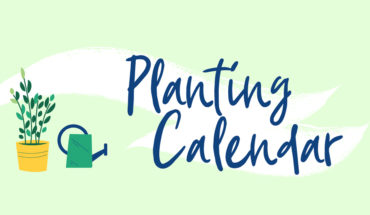 Planting Calendar: When, Where, And How To Plant A Garden