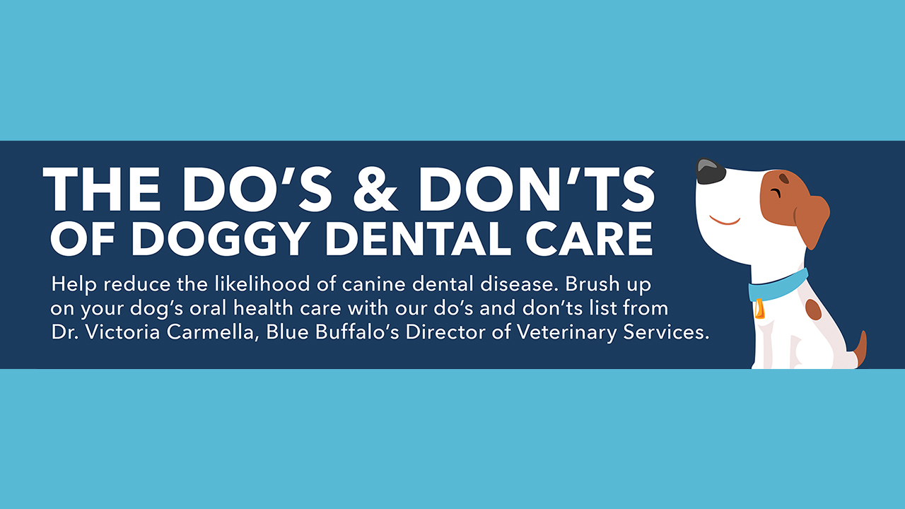 A Basic Guide To your Dog's Oral Health